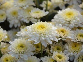 家族葬で気になる「お花代」